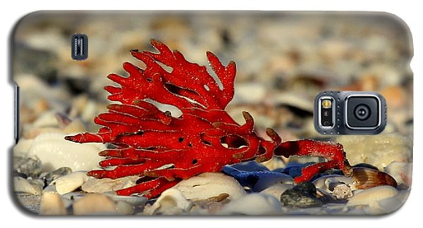Red Coral Galaxy S5 Case