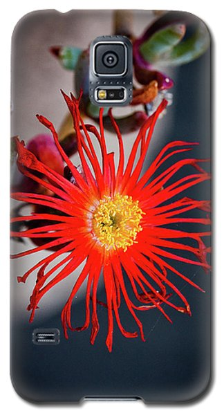 Galaxy S5 Case featuring the photograph Red Crab Flower by Bruno Spagnolo