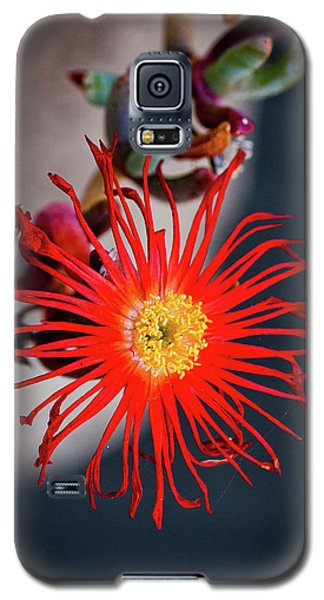Red Crab Flower Galaxy S5 Case