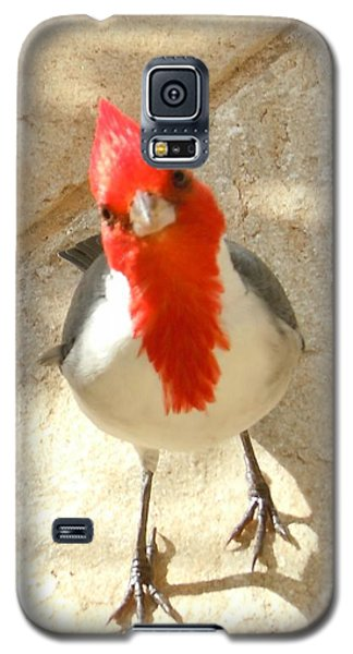 Red-crested Cardinal At My Feet Galaxy S5 Case
