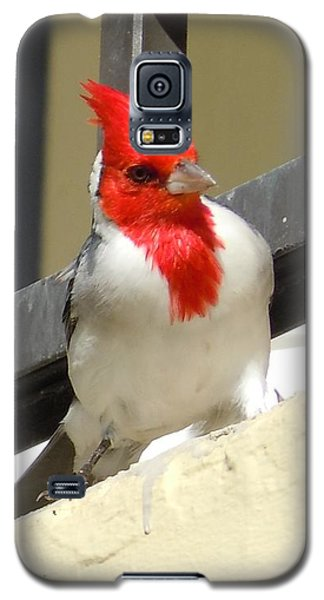 Red-crested Cardinal Posing On The Balcony Galaxy S5 Case