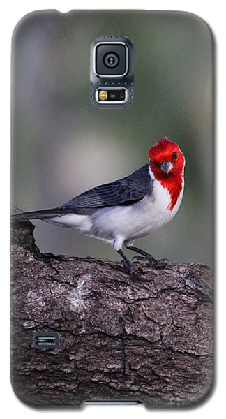 Red Crested Posing Galaxy S5 Case