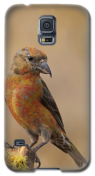 Red Crossbill Galaxy S5 Case by Doug Herr