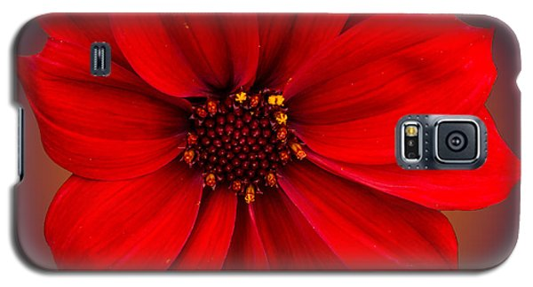Galaxy S5 Case featuring the photograph Red Dahlia-bishop-of-llandaff by Brian Roscorla