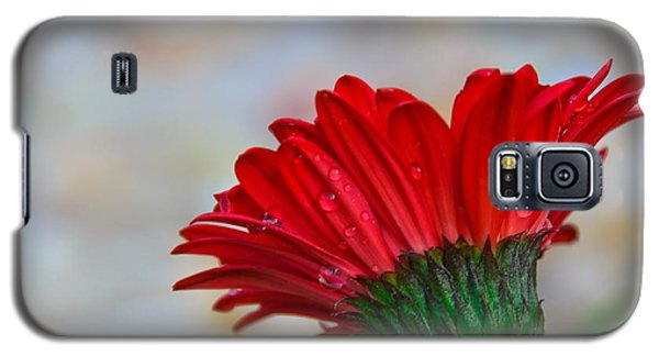 Galaxy S5 Case featuring the photograph Red Daisy  by John Harding