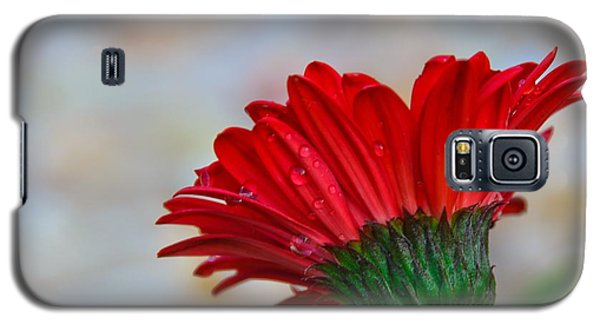 Red Daisy  Galaxy S5 Case by John Harding