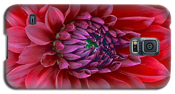 Red Dalia Up Close Galaxy S5 Case by James Steele