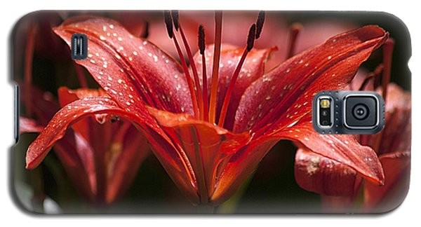 Galaxy S5 Case featuring the photograph Red Day Lily 20120615_52a by Tina Hopkins