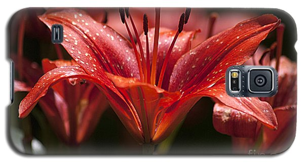 Red Day Lily 20120615_52a Galaxy S5 Case