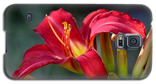 Galaxy S5 Case featuring the photograph Red Day Lily  by Irina Hays