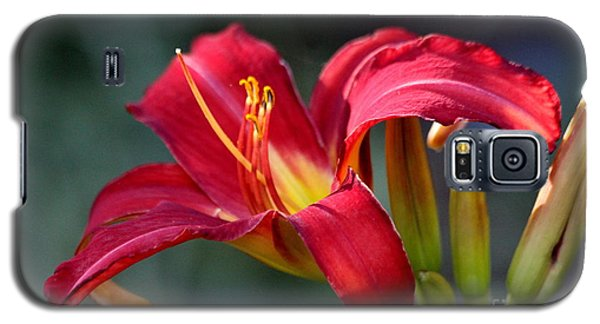 Red Day Lily  Galaxy S5 Case by Irina Hays