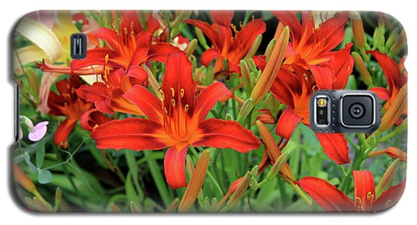 Red Daylilies Galaxy S5 Case