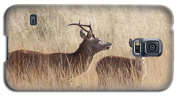 Red Deer Stag And Hind Galaxy S5 Case