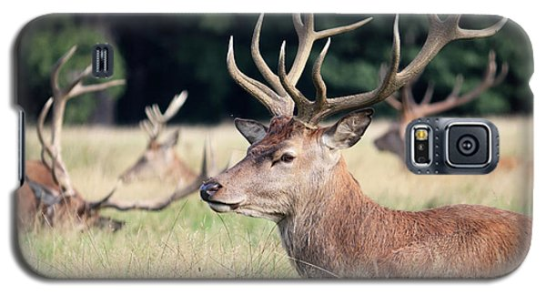 Red Deer Stags Richmond Park Galaxy S5 Case