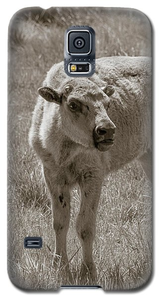 Galaxy S5 Case featuring the photograph Red Dog Buffalo Calf by Rebecca Margraf