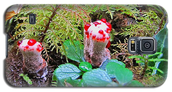 Galaxy S5 Case featuring the photograph Red-dotted Mushroom by Sean Griffin