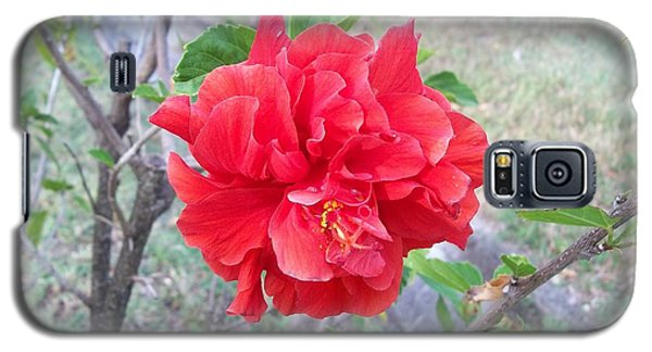 Red Double Hibiscus Galaxy S5 Case