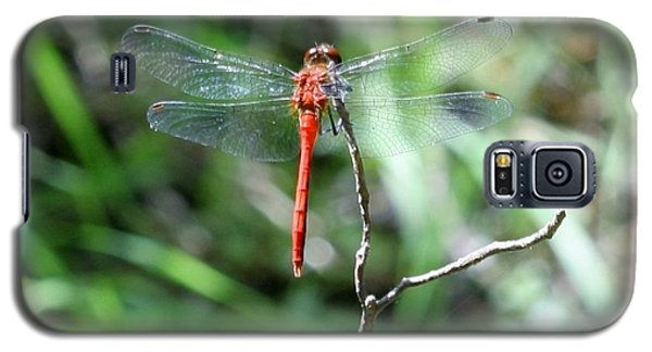 Galaxy S5 Case featuring the photograph Red Dragonfly by Karen Silvestri