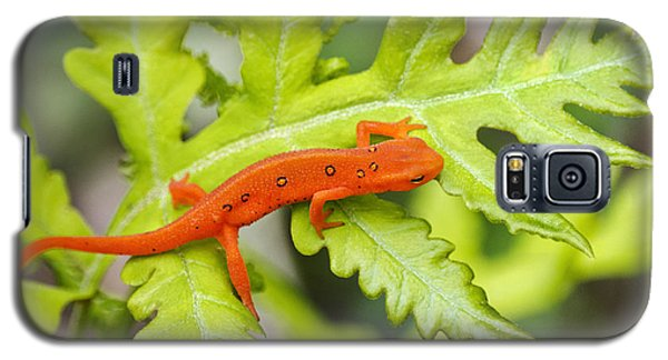 Red Eft Eastern Newt Galaxy S5 Case