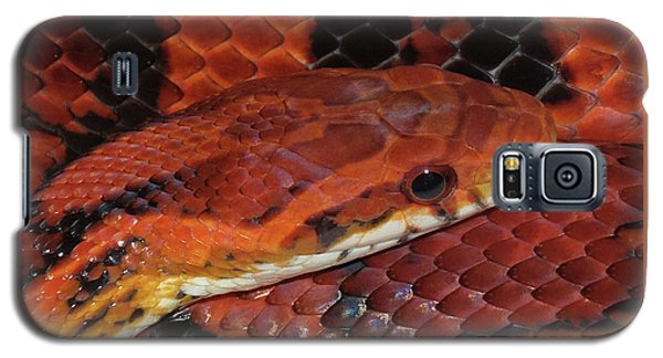 Red Eyed Snake Galaxy S5 Case by Patricia McNaught Foster
