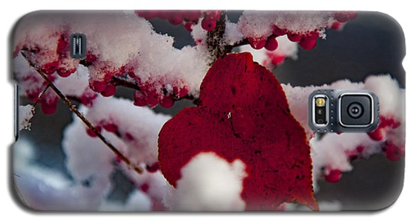 Red Fall Leaf On Snowy Red Berries Galaxy S5 Case