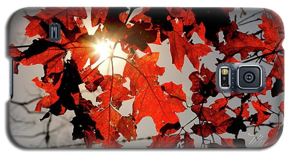 Red Fall Leaves Galaxy S5 Case