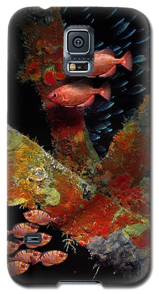 Red Fish On The Rhone Galaxy S5 Case