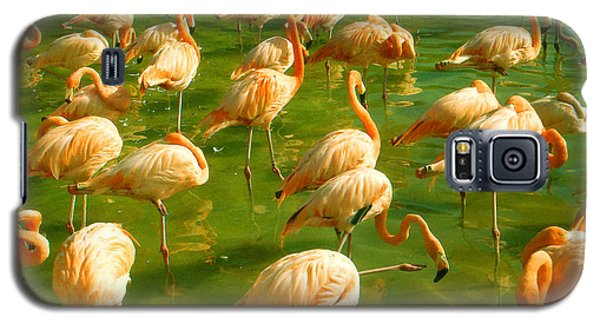 Red Florida Flamingos In Green Water Galaxy S5 Case