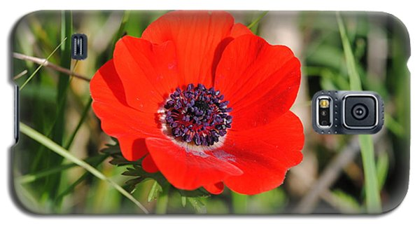 Red Anemone Coronaria 4 Galaxy S5 Case