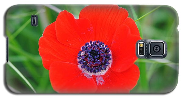 Red Anemone Coronaria 3 Galaxy S5 Case
