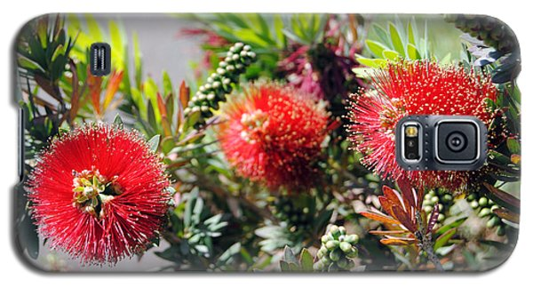 Callistemon - Bottle Brush 6 Galaxy S5 Case