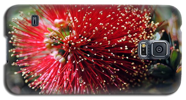Callistemon - Bottle Brush 5 Galaxy S5 Case