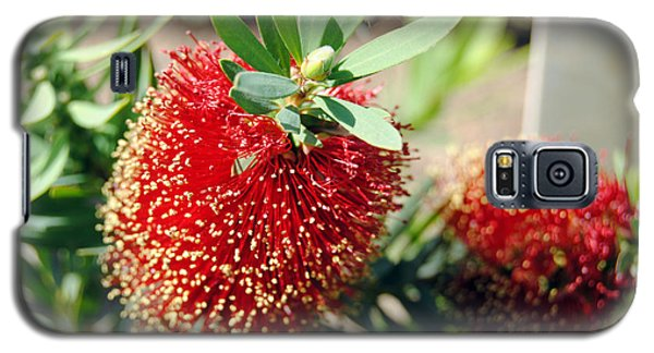Callistemon - Bottle Brush 4 Galaxy S5 Case