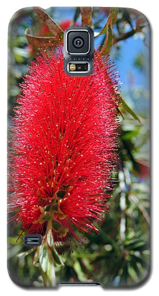 Callistemon - Bottle Brush 2 Galaxy S5 Case