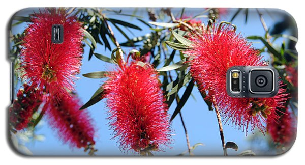 Callistemon - Bottle Brush 3 Galaxy S5 Case