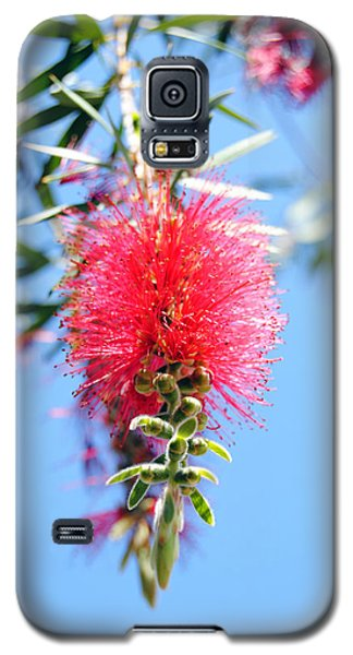 Callistemon - Bottle Brush 1 Galaxy S5 Case