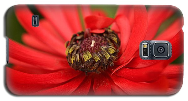 Red Flower Galaxy S5 Case by Ralph A  Ledergerber-Photography