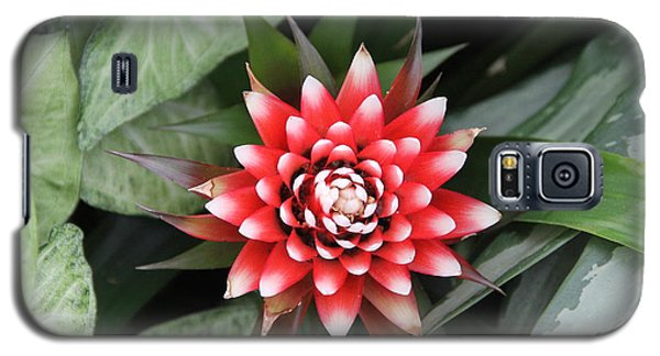 Red Flower With White Tips Galaxy S5 Case
