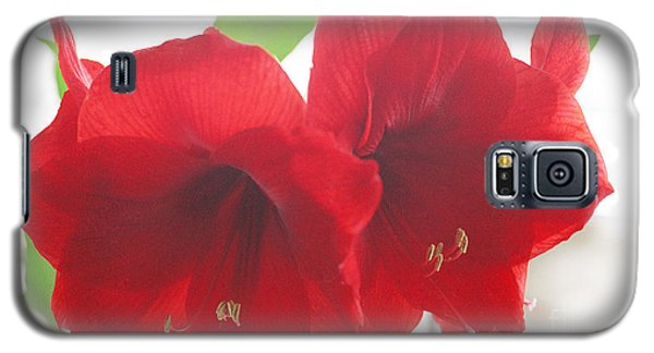 Galaxy S5 Case featuring the photograph Amaryllis by Rebecca Harman