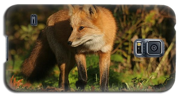 Galaxy S5 Case featuring the photograph Red Fox by Doris Potter
