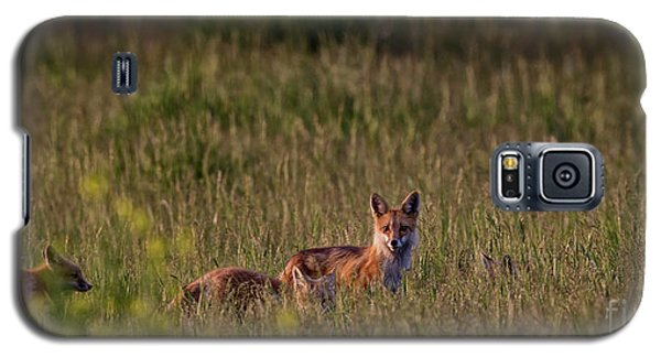 Red Fox Family Galaxy S5 Case