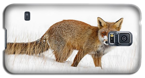 Red Fox In A Snow Covered Scene Galaxy S5 Case by Roeselien Raimond