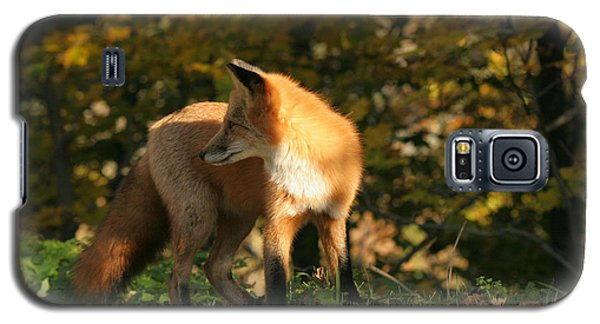 Galaxy S5 Case featuring the photograph Red Fox In Shadows by Doris Potter