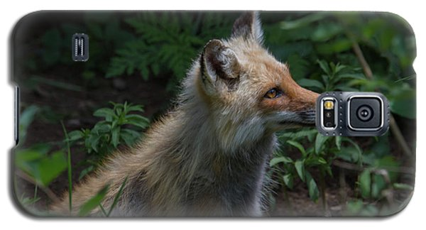 Red Fox In The Forest Galaxy S5 Case