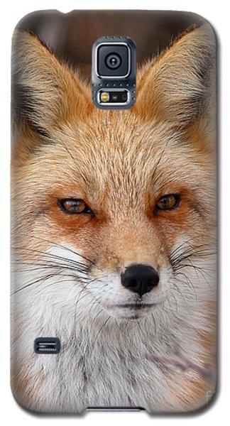 Red Fox In Winter Ruff Galaxy S5 Case