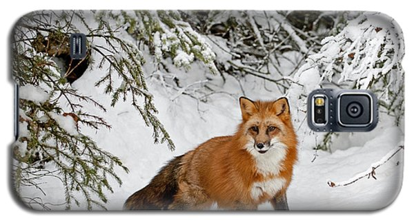 Red Fox In Winter Galaxy S5 Case