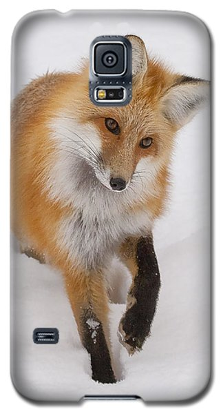 Red Fox Portrait Galaxy S5 Case