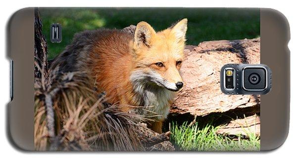 Red Fox On Patrol Galaxy S5 Case
