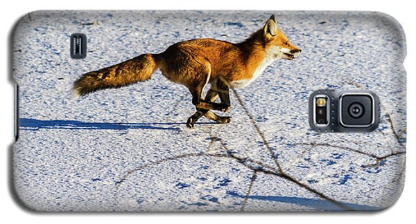 Red Fox On The Run Galaxy S5 Case