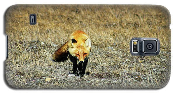 Galaxy S5 Case featuring the photograph Red Fox On The Tundra by Anthony Jones